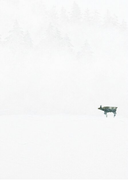 isard neige acrylP318