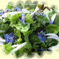 Salade fleurie aux fleurs de bourrache
