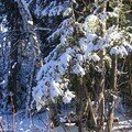 PremNeige_061228_14