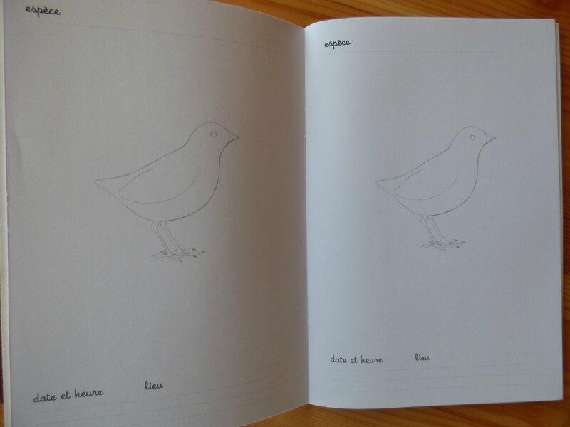 Coffret Montessori oiseaux (4)