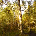 13-09-08 Sortie montagne (82)