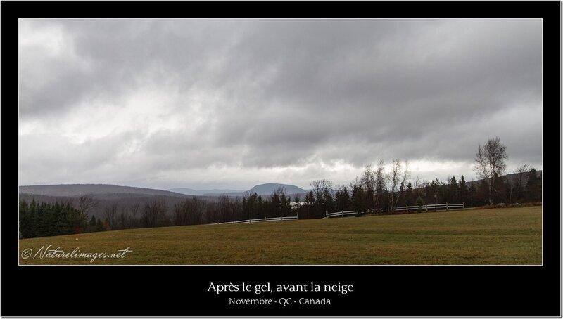 IMG_5501-naturelimages