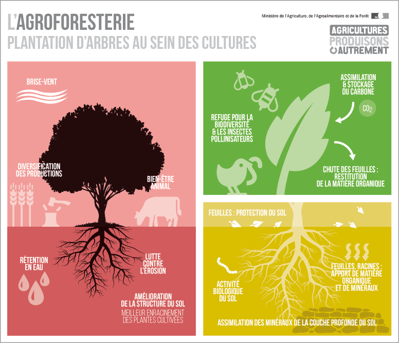 agroforesterie776_cle07dd19-d7dc2