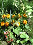 jardinage_2