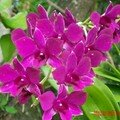 orchid_38