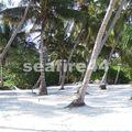 hôtel Pongwe beach_plage_135
