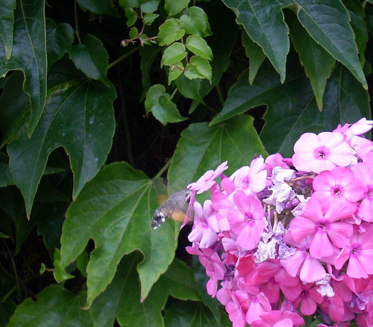 Un nouvel habitant dans mon jardin