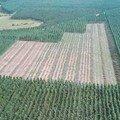 champs d'eucalyptus près de ponton