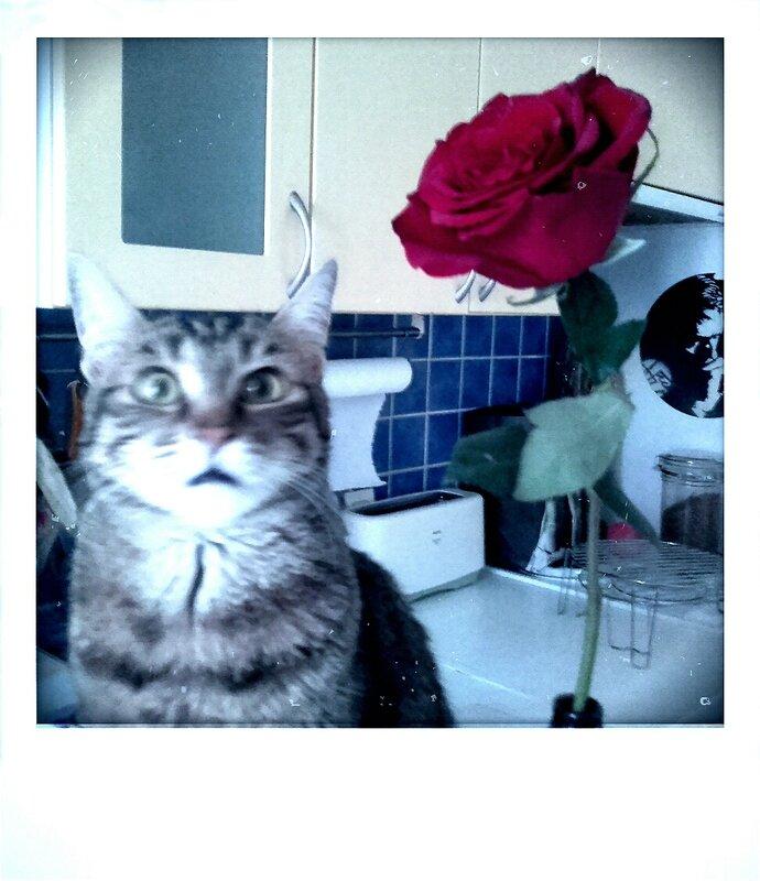 1-Hapy rose_1483265692538