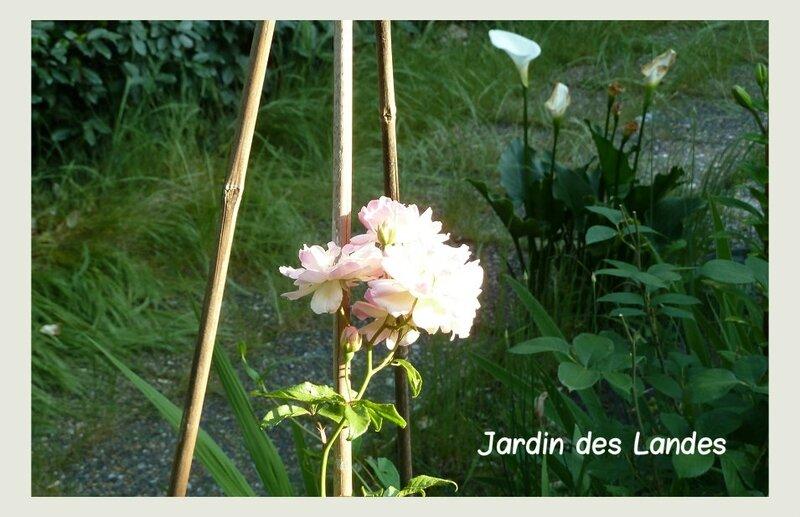 rosier deprez 21 05