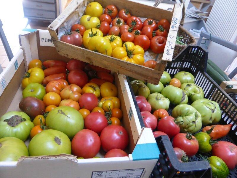 23-tomates (7)