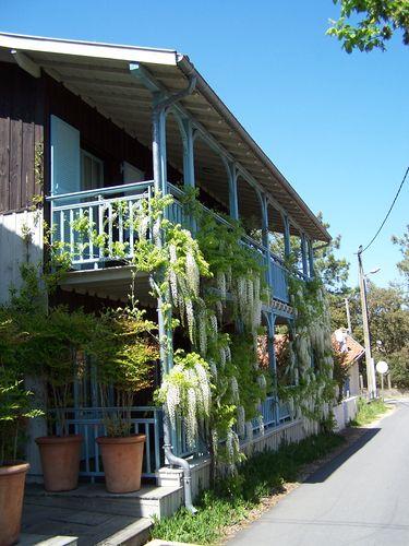 Cap-Ferret-villa à glycine