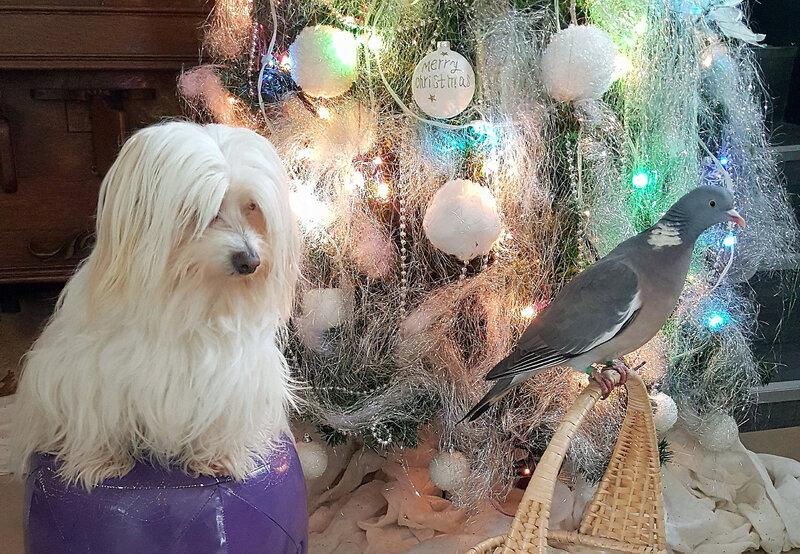 Coco à Noel (27)