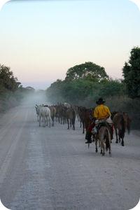 pantanal_chloe_002