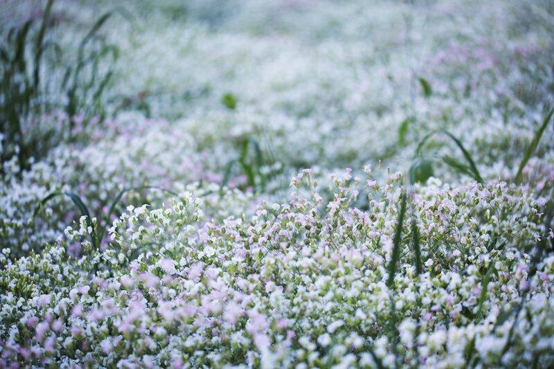 champ-fleur16-03