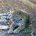 Audubon Park et Zoo (90)