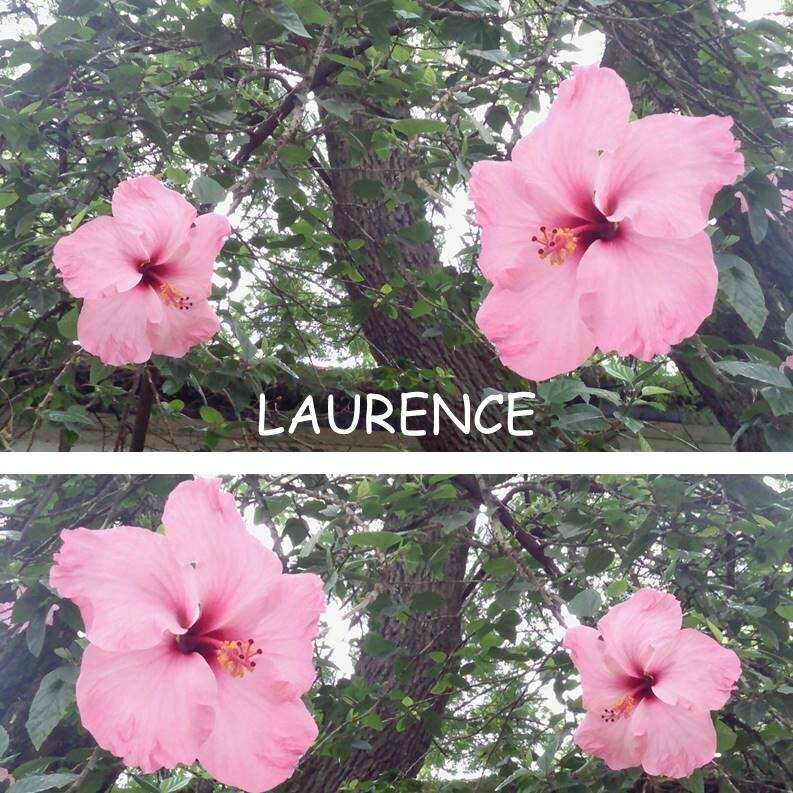 LAURENCE 2