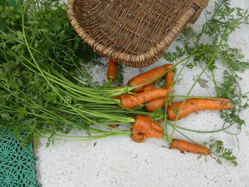 24-carottes (1)