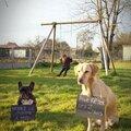 Un anniv qui a du chien : l'invitation