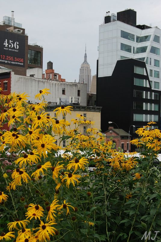 RUDBEKIA ET EMPIRE