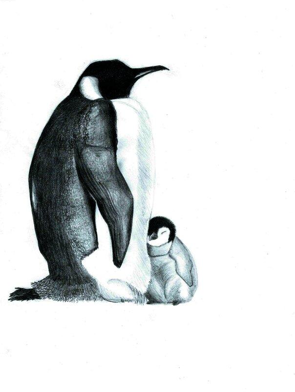 Pingouins fin