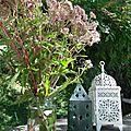 Jardin et reptiles.