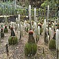 Collection de cactus au jardin LATOUCHE au Carbet