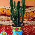 le cactus de tricot rayé