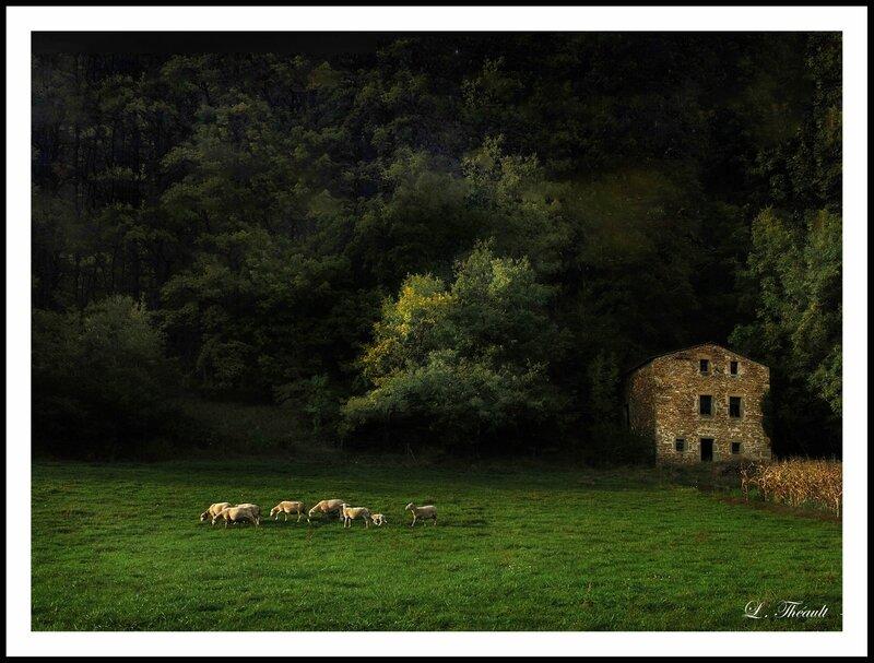 Moutons Dieulefit cb