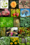 250px_Diversity_of_plants_image_version_3