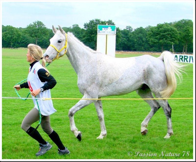 Le 78 département du cheval (11)