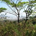 nicoya_cerro escondido_vue de la for^t tropicale sèche