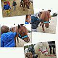 Lundi 24 avril 2017 - poneys