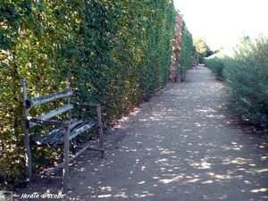 Jardin de l'Isle - Ainay-le-Vieil