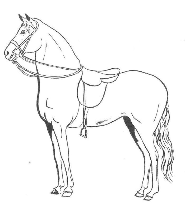 Chevaux de trait chevaux de course ribambelles ribambins - Dessin cheval de trait ...