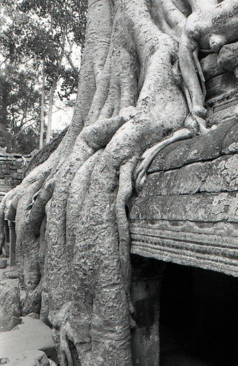 cambodge_angkor_arbre_temple