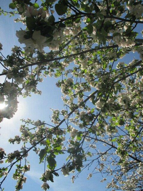 jardin 6 mai2016 043