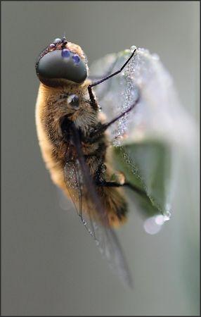 rosee_insecte_vertic_Torfou_GP_150810