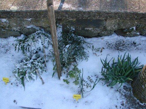2008 04 07 Mes vavace sous le peu de neige tombé la nuit