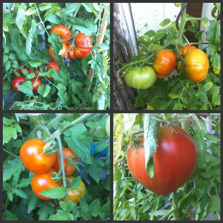 tomates28082010_2