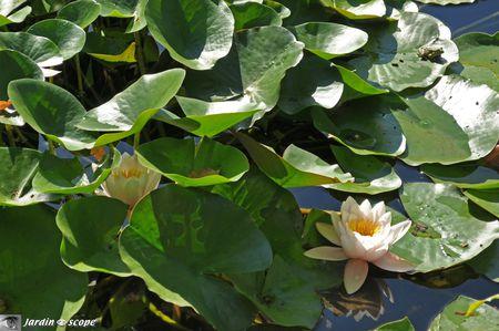 Jardin-chinois-Hualu