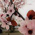 Bouquet du week end # 106 - sem 14
