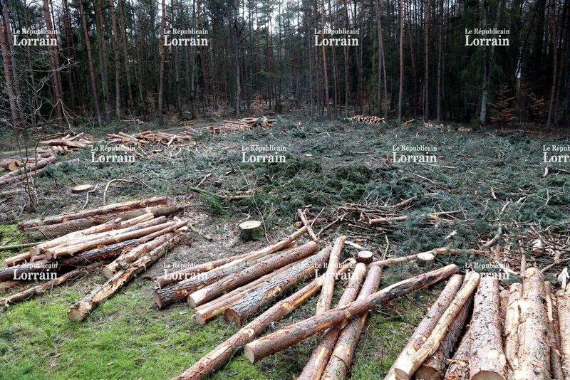 foret-du-guensbach-a-morsbach-le-deboisement-est-lance-et-la-colere-des-associations-de-protection-de-l-environnement-gronde-phot (1)