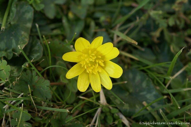 fin février fleur jaune