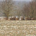 Battue de chasse le samedi 25 janvier 2014 à l'étang du bischwald