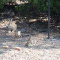Sur l'île aux lapins (Mer Egée)