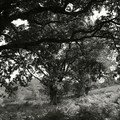 arbre basque