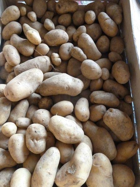 01-pommes de terre (2)