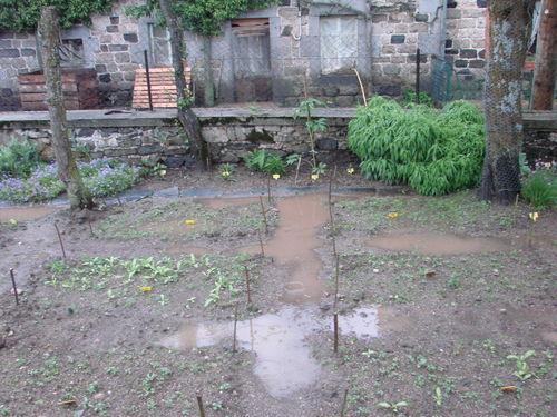 2008 06 10 Une partie de mon jardin aprés l'orage