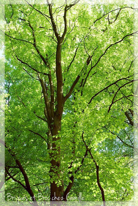2013 05 05 - Forêt de Compiègne